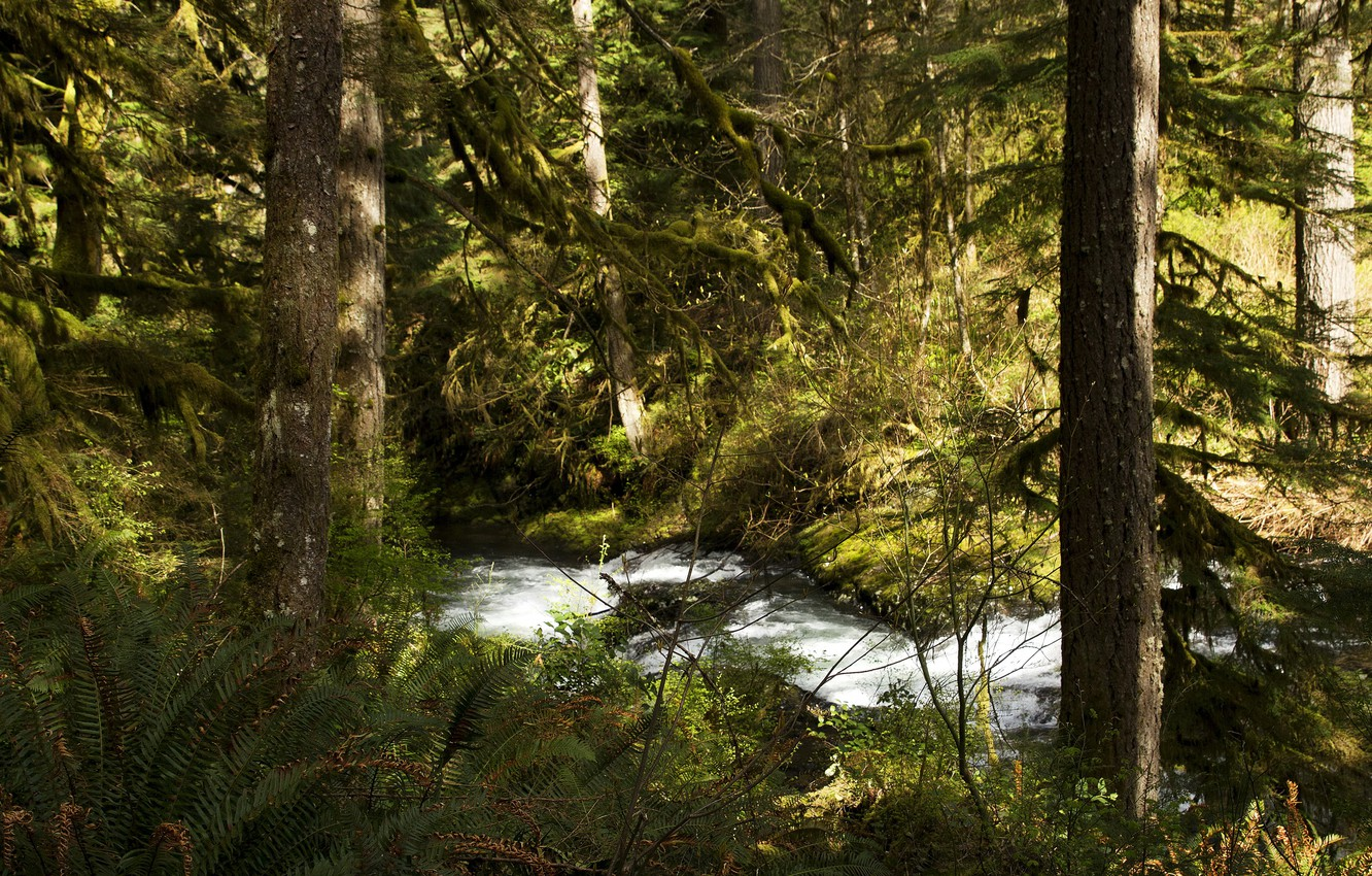 Photo wallpaper forest, trees, stream, USA, the bushes, Silver Falls National Park