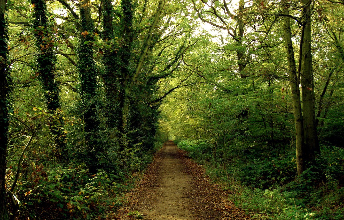 Photo wallpaper road, forest, path