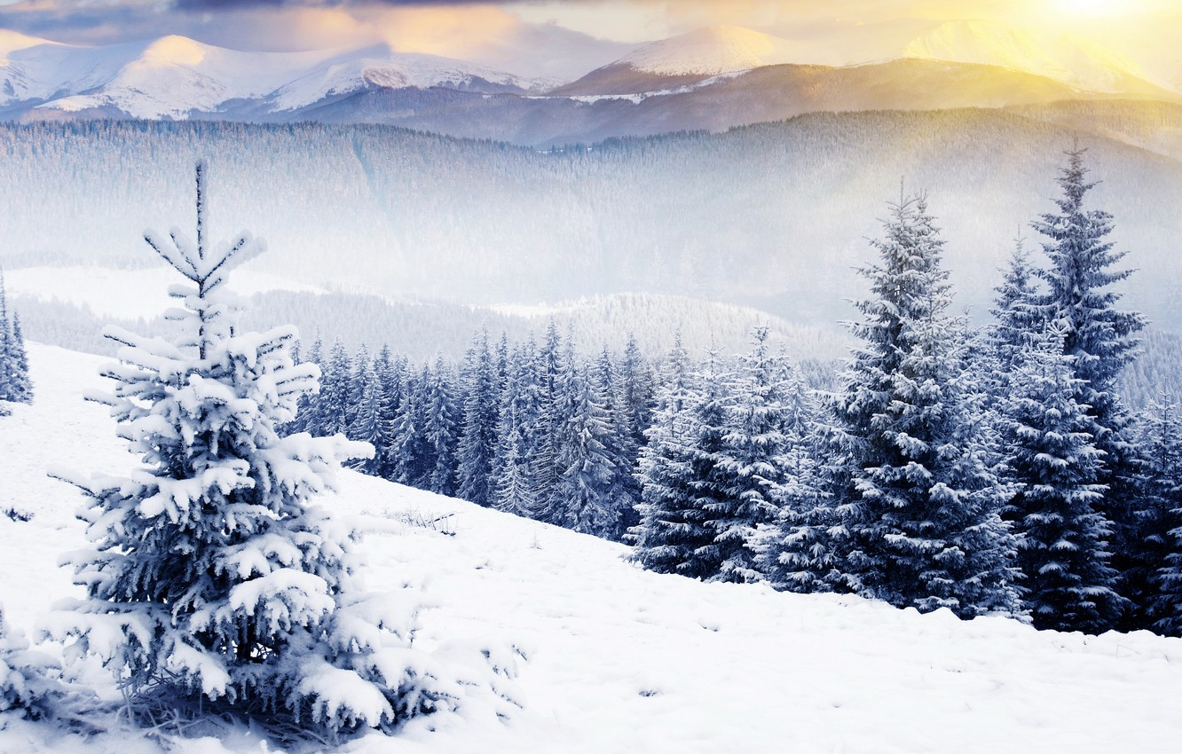 Photo wallpaper winter, forest, the sky, the sun, rays, snow, trees, landscape, mountains, nature, tops, beauty, treatment, …