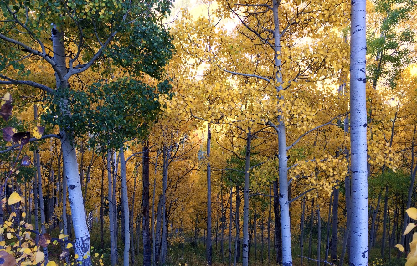 Photo wallpaper autumn, forest, leaves, trees, grove