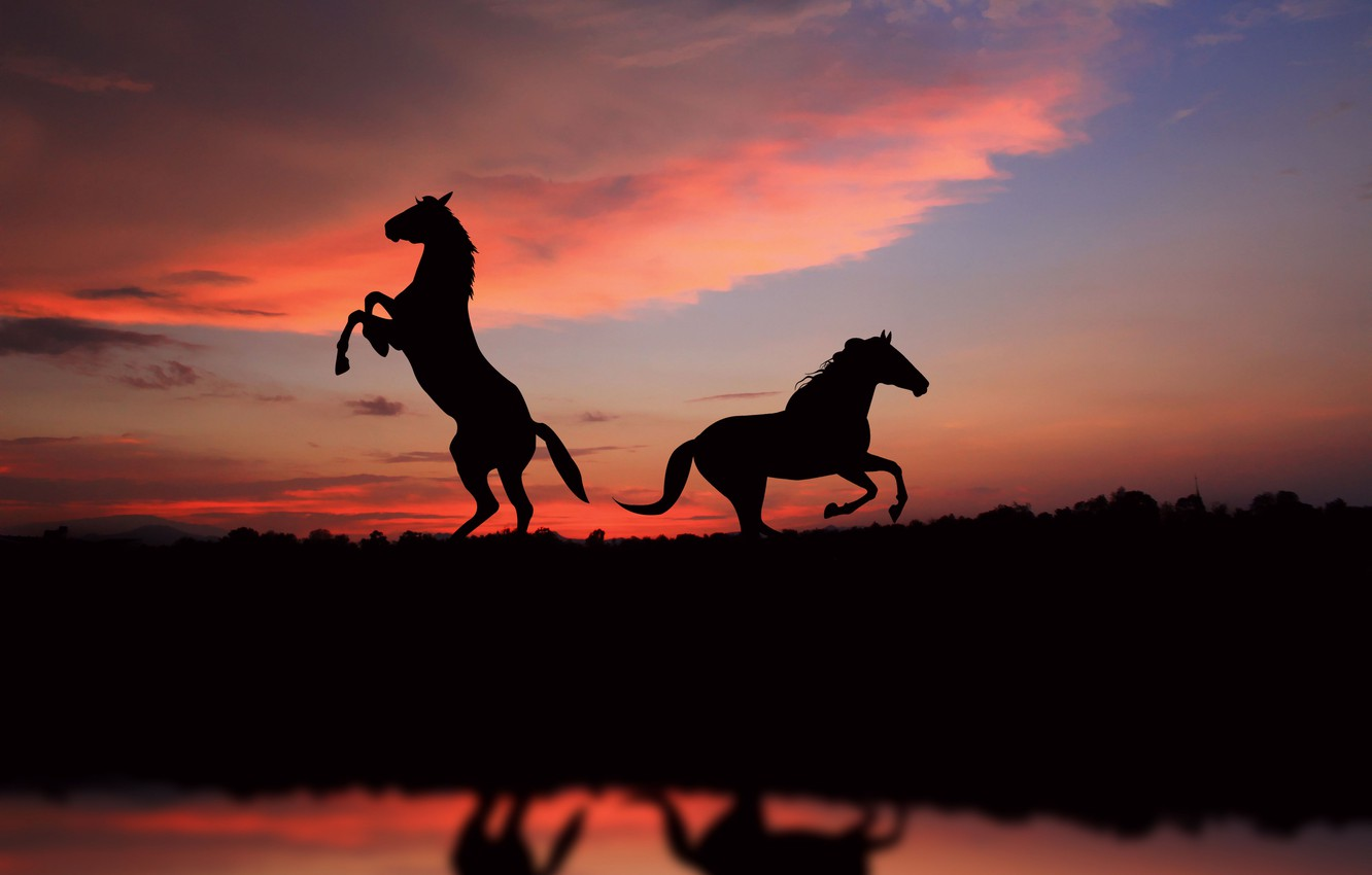 Photo wallpaper freedom, sunset, horse, sunset, view, horses, picture, great, silhouette