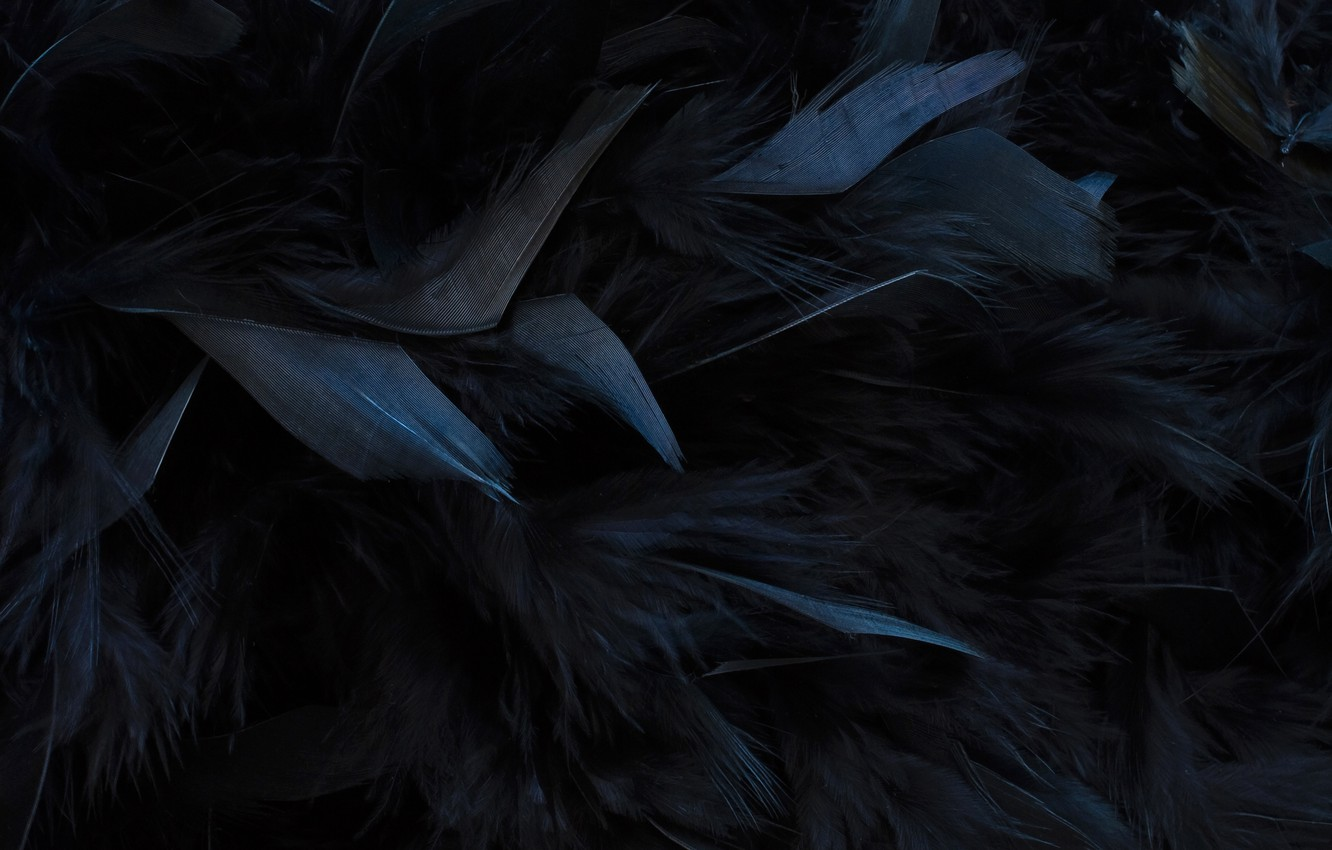Wallpaper Texture Feathers Black Images For Desktop