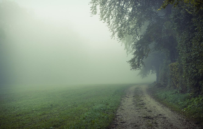 Photo wallpaper road, field, nature, fog, morning