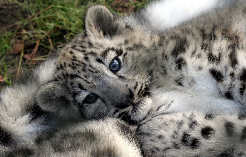 Photo wallpaper animal, cub, bars