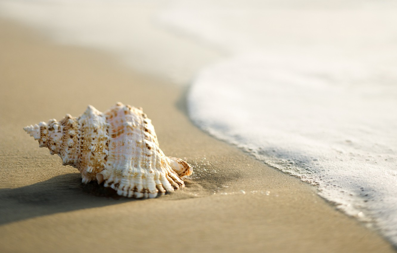 Photo wallpaper sand, sea, shell, surf