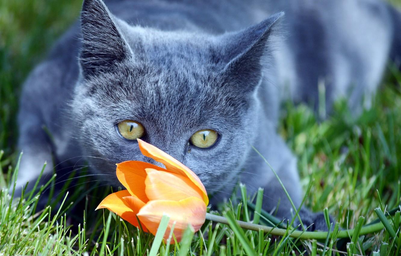 Photo wallpaper flower, cat, look, Koshak, Tomcat