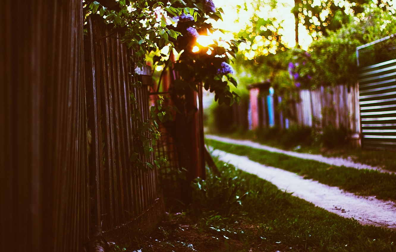 Photo wallpaper grass, the sun, sunset, foliage, the fence, spring, lilac, bokeh, cottage