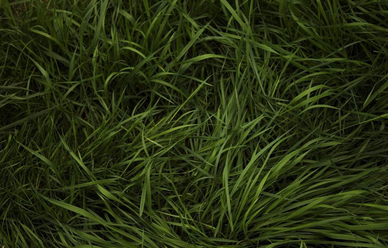 Photo wallpaper greens, grass, weed