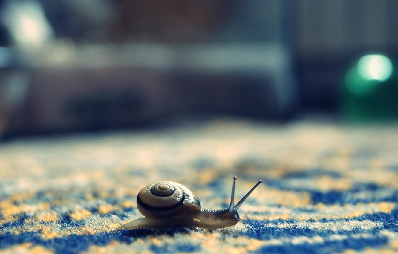 Photo wallpaper snail, pile, bokeh