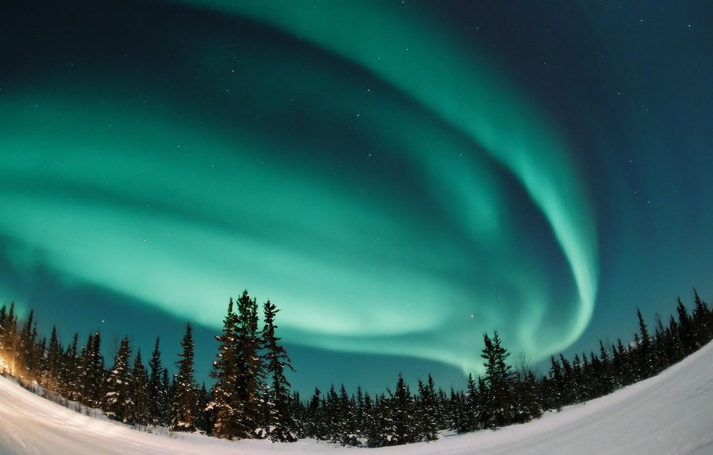 Photo wallpaper forest, Aurora, Northern lights