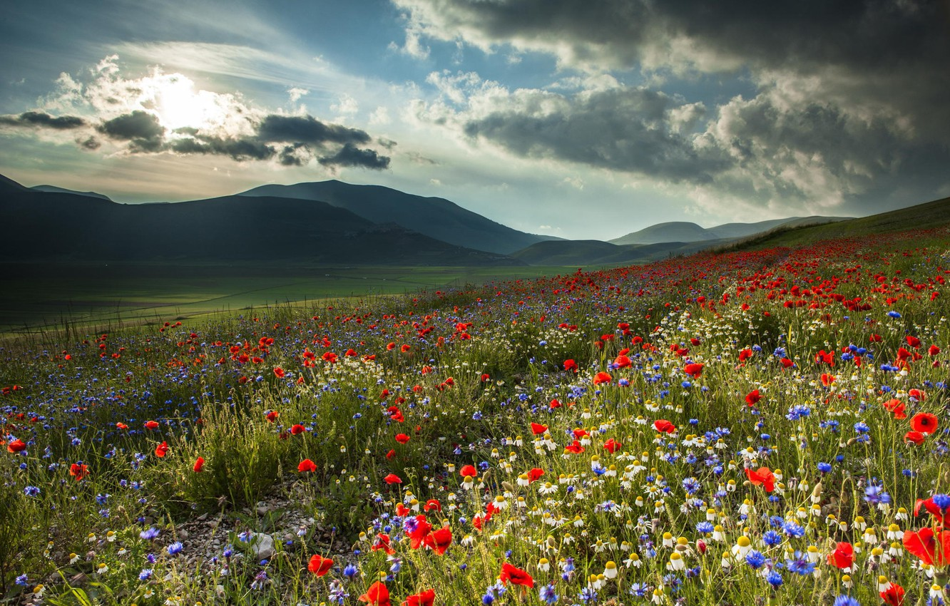 Photo wallpaper field, flowers, mountains, nature