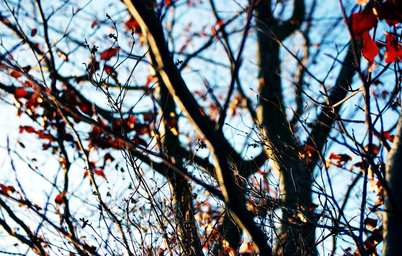 Photo wallpaper autumn, the sky, branches, tree, Sunny day, the last leaves
