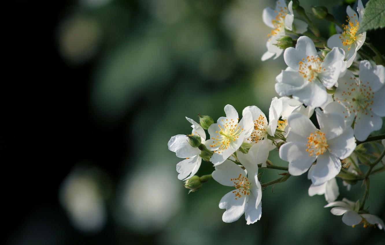Photo wallpaper flowers, glare, branch, spring, white, flowering