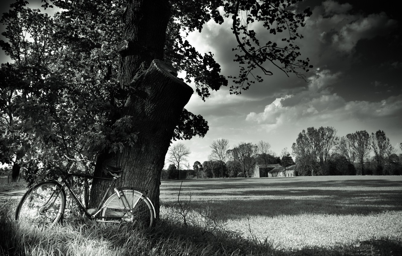 Wallpaper Field Landscape Nature Bike Tree Bicycle Black And