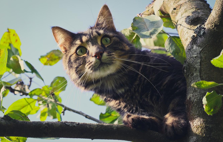Photo wallpaper eyes, cat, look, tree, Koshak