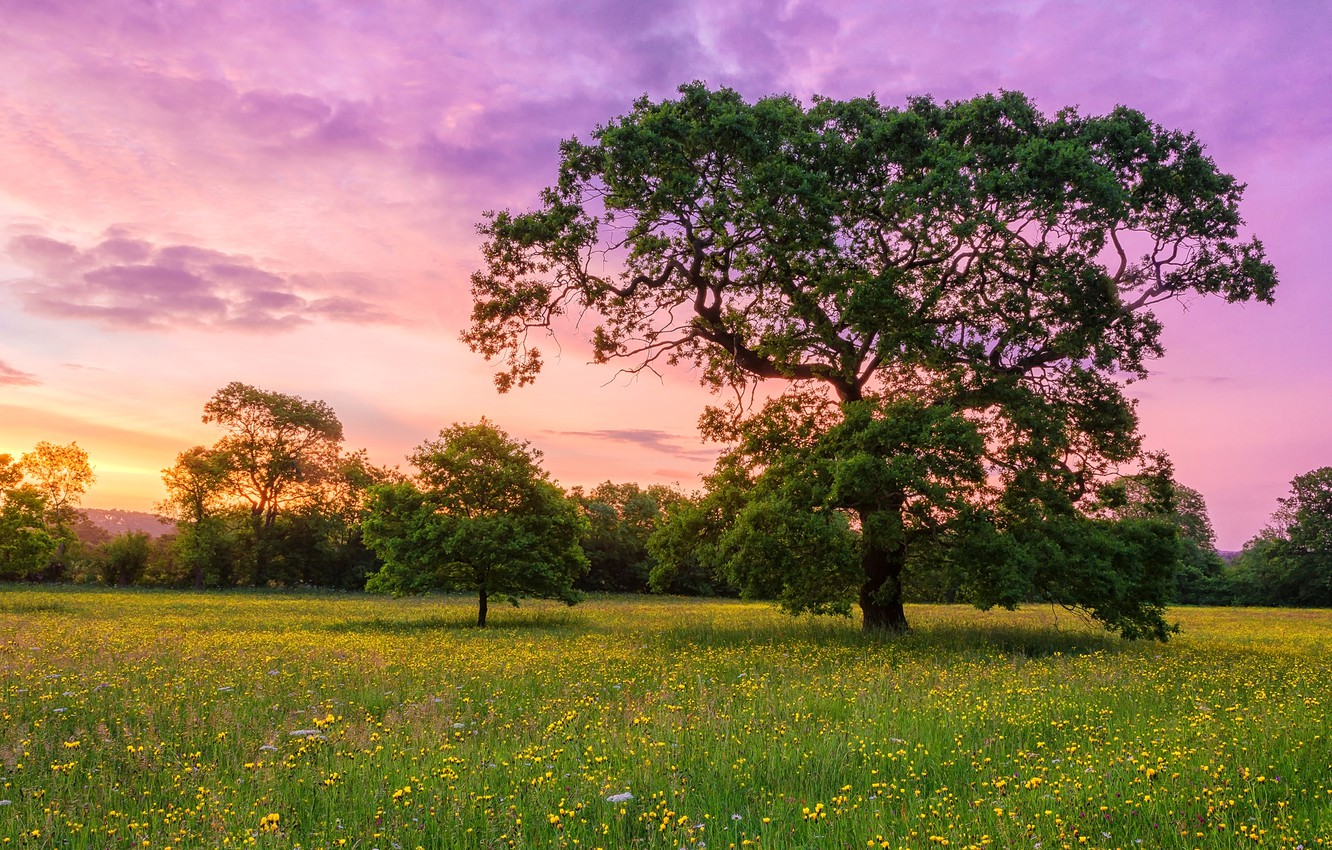 Photo wallpaper the sky, clouds, flowers, tree, meadow