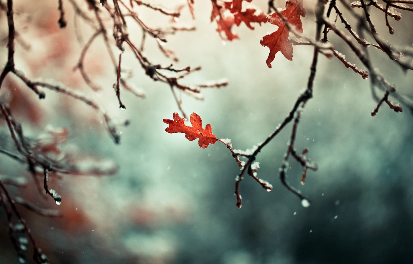 Photo wallpaper autumn, leaves, snow, branches, nature, branch