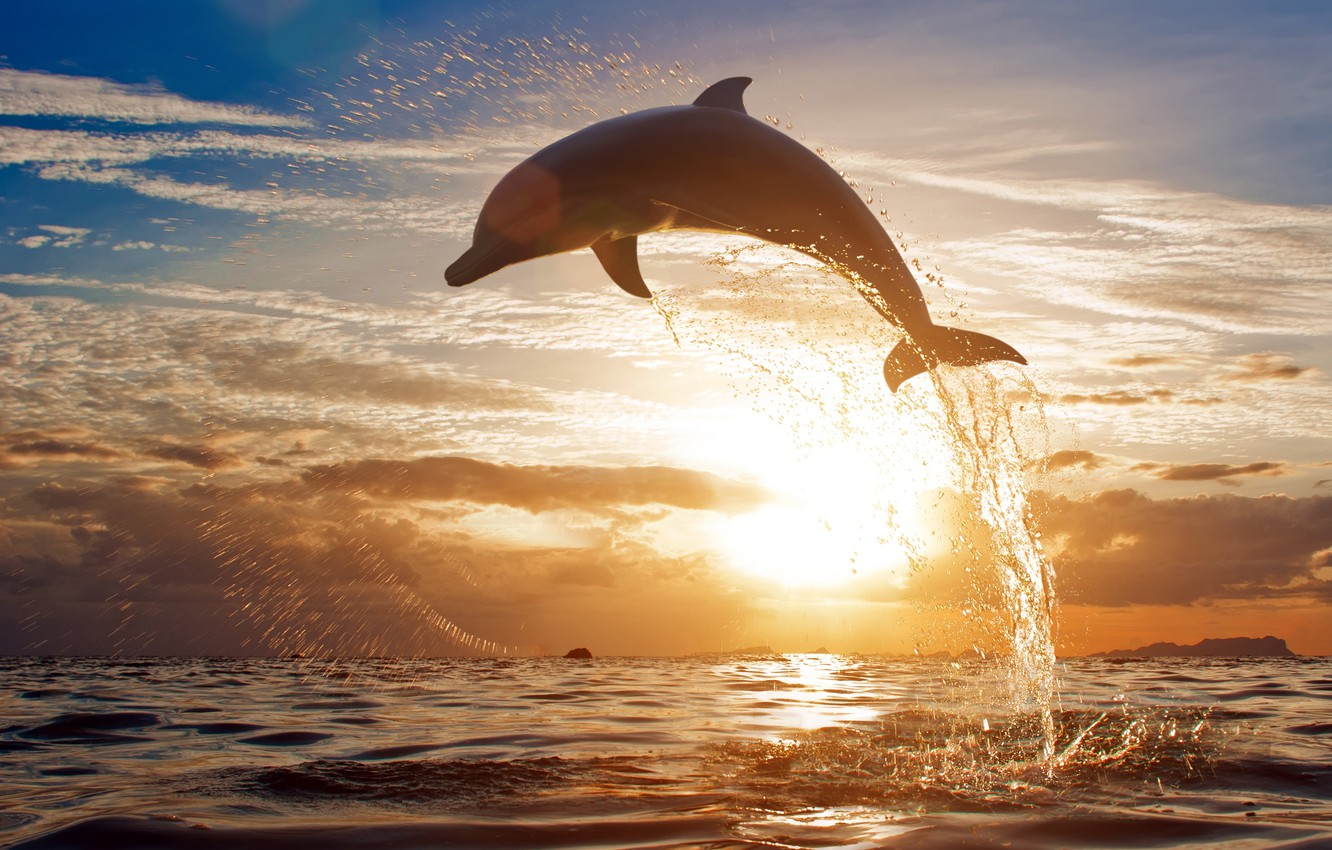 Photo wallpaper sea, the sky, clouds, sunset, squirt, Dolphin