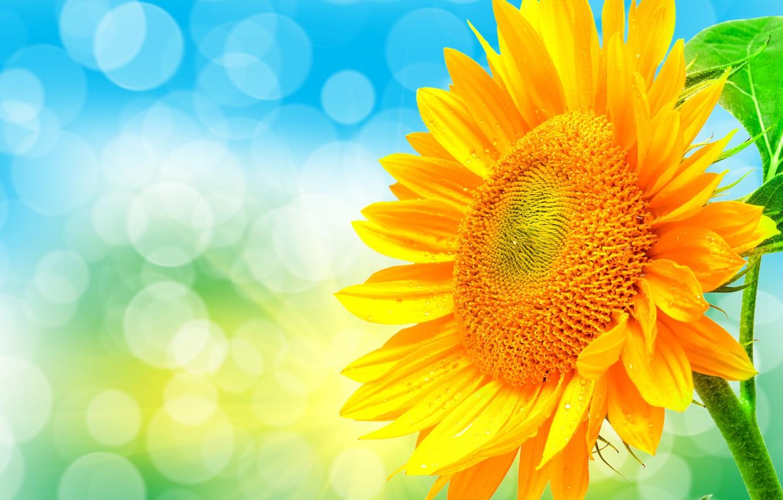 Photo wallpaper light, nature, sunflower, petals, Blik