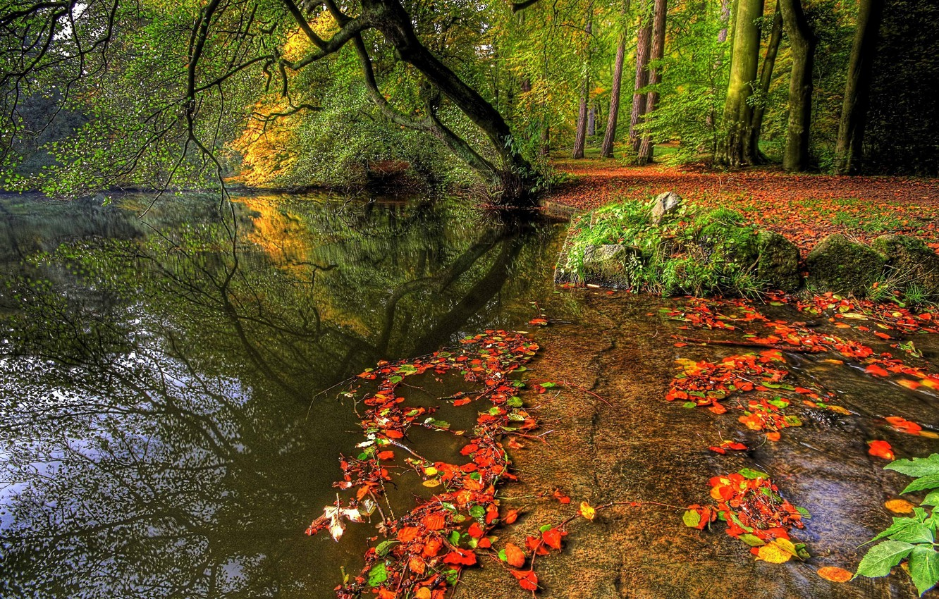 Photo wallpaper autumn, forest, water, trees, nature, plants, forest, trees, nature, water, autumn, leaves, rivers