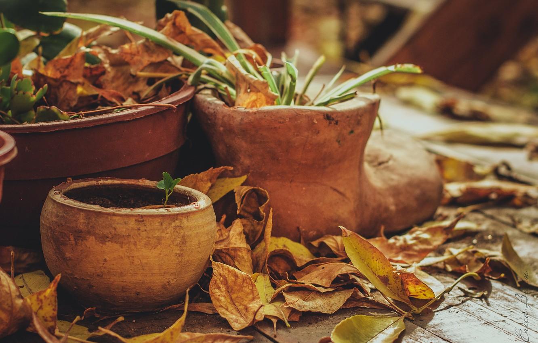 Photo wallpaper wood, leaves, plants, jars