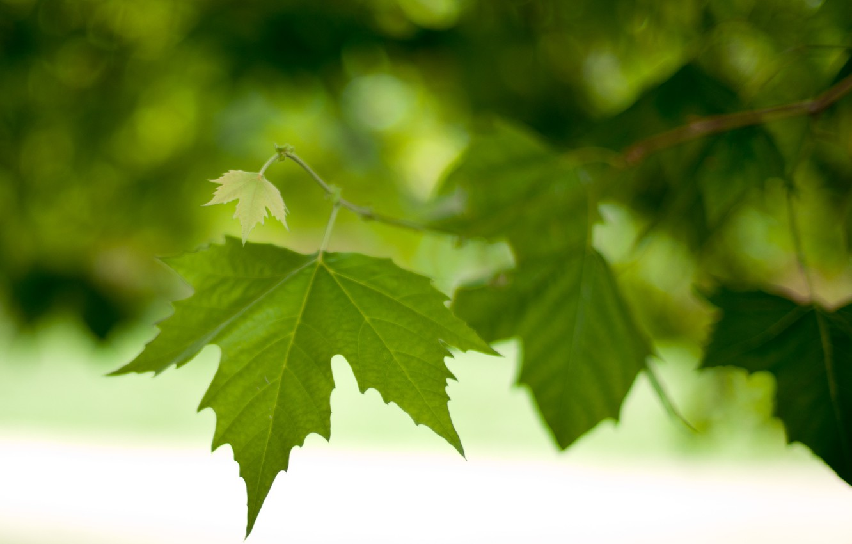 Photo wallpaper leaves, macro, foliage, branch, spring, green, leaves, bokeh