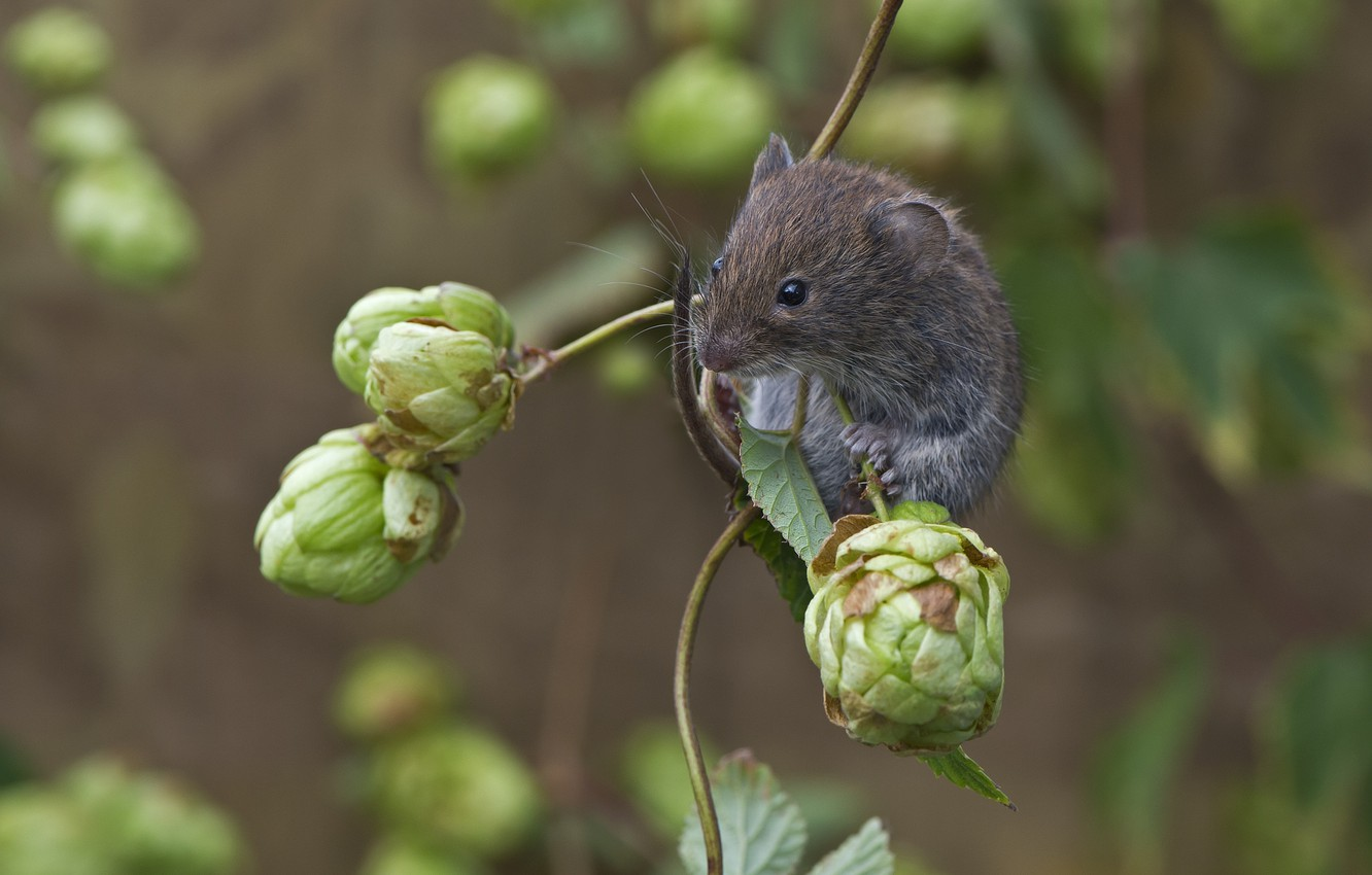 Wallpaper Nature Animal Branch Mouse Bumps Rodent Hops Images