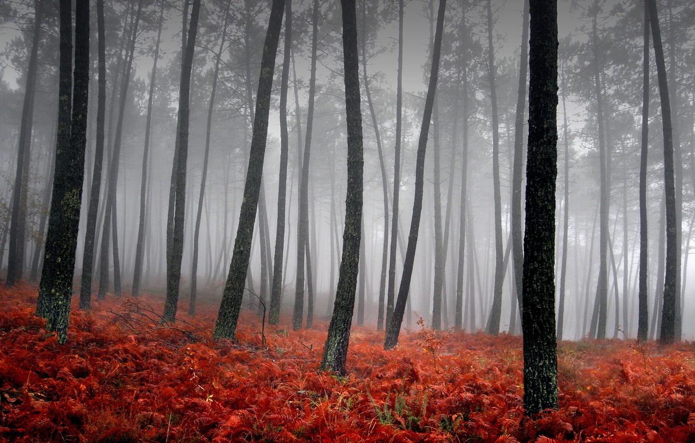 Photo wallpaper grass, trees, red, fog