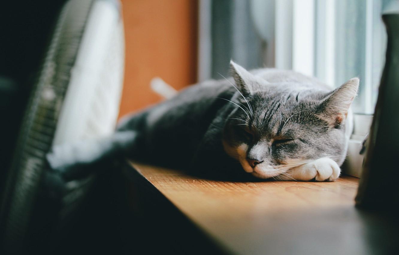 Photo wallpaper cat, grey, wool, sleeping, lies