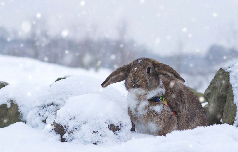 Wallpaper Winter Snow Rabbit Images For Desktop Section
