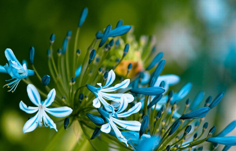 Photo wallpaper leaves, macro, flowers, petals, stem, blue, buds