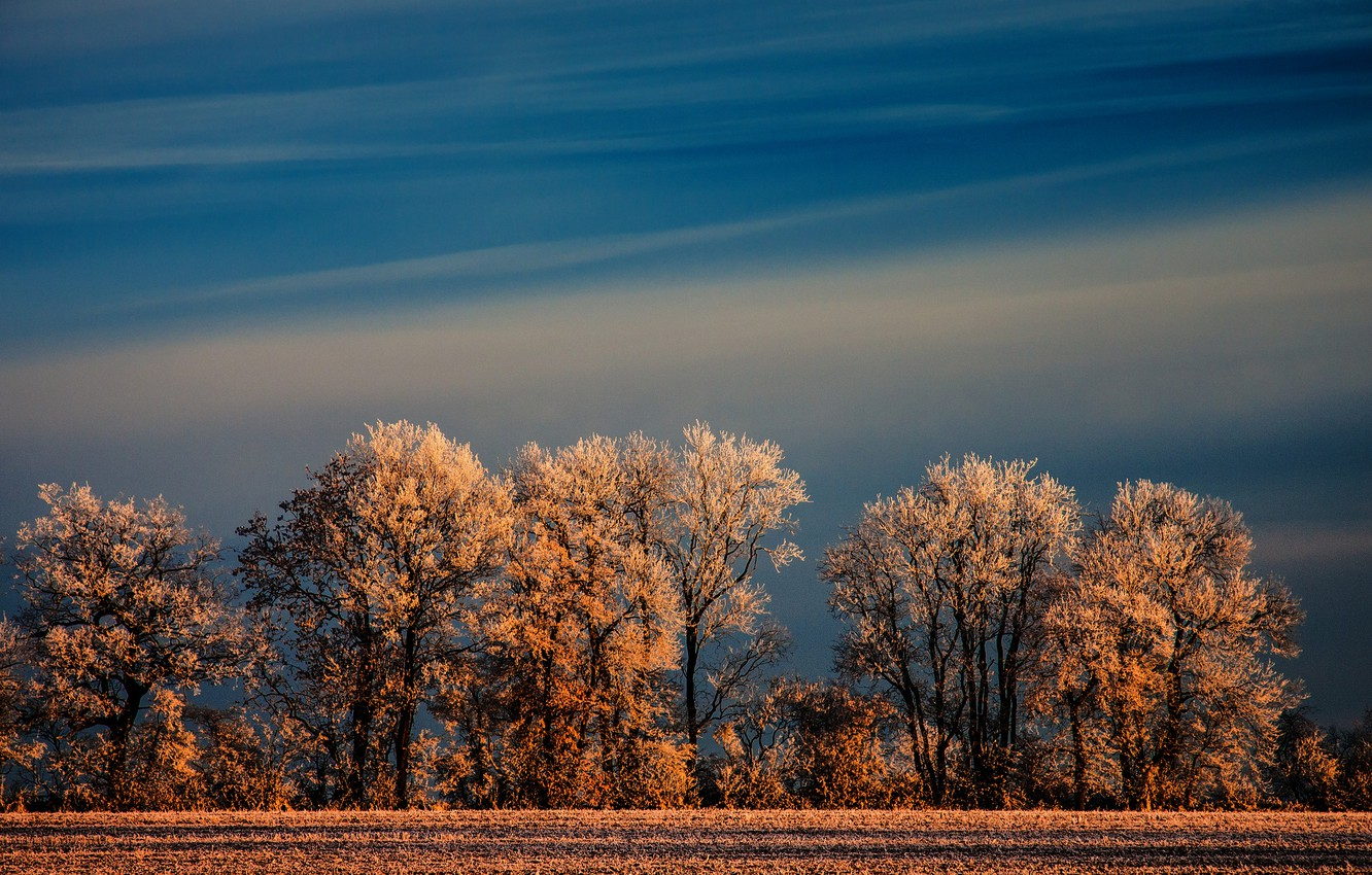Photo wallpaper winter, frost, field, the sky, trees, nature