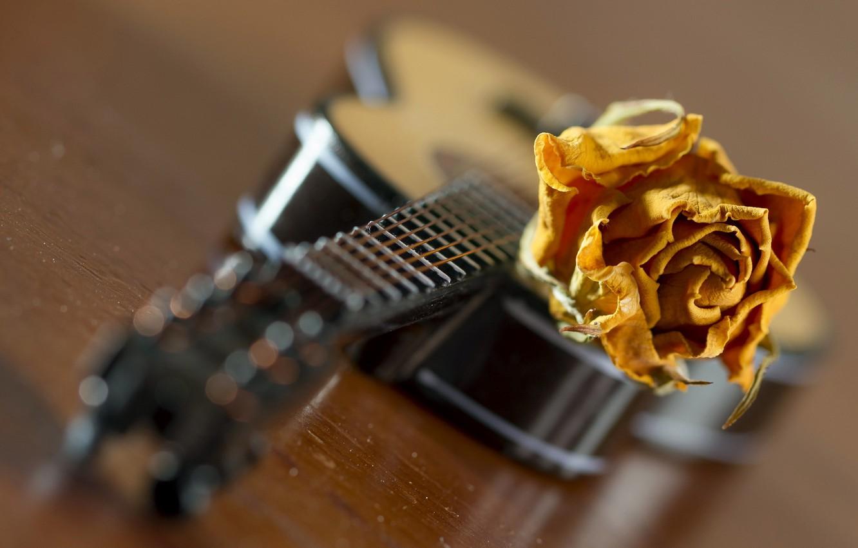 Photo wallpaper music, rose, guitar