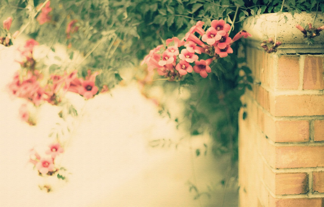 Photo wallpaper flowers, style, background, the fence, texture