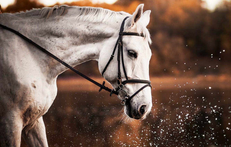 Photo wallpaper nature, background, horse