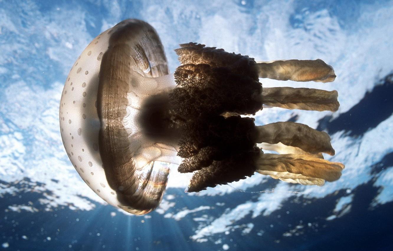 Photo wallpaper sea, water, Medusa