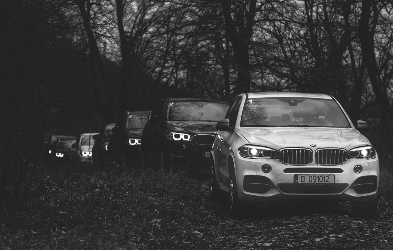 Photo wallpaper forest, BMW, BMW, New, jeeps