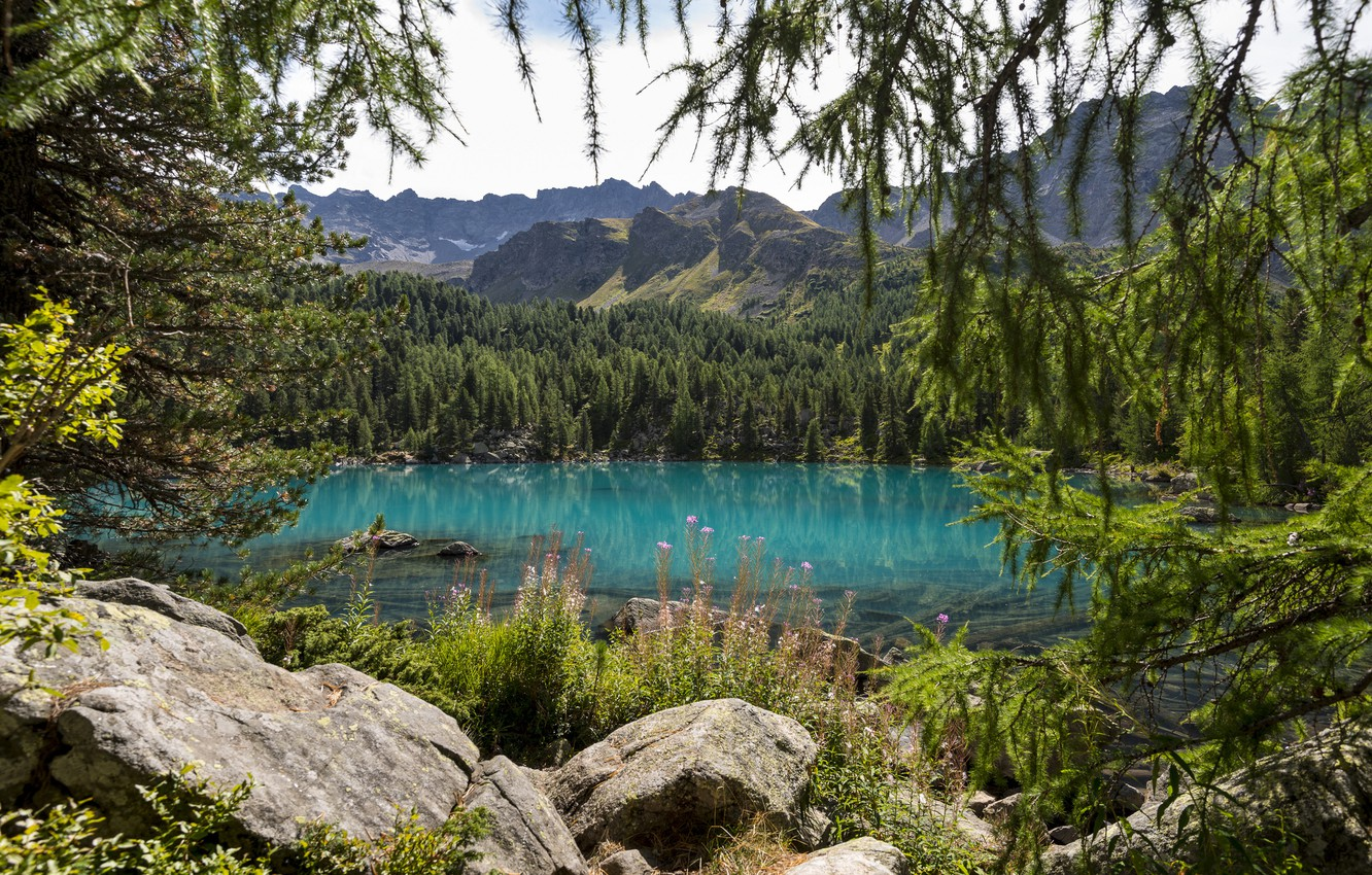 Photo wallpaper forest, trees, flowers, mountains, nature, lake, spruce, coniferous