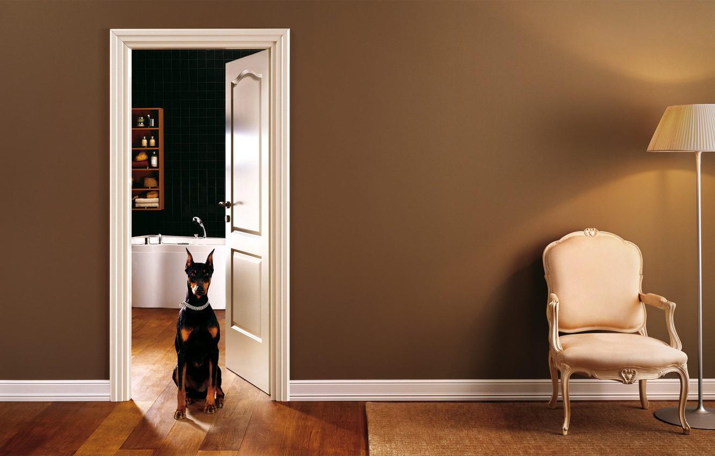 Photo wallpaper interior, chair, bathroom, doggie