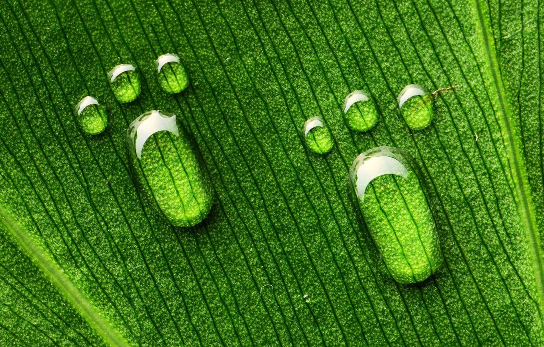 Photo wallpaper drops, macro, sheet, green, legs, veins