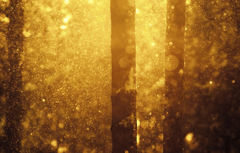 Photo wallpaper winter, forest, snow, nature, Joni Niemela