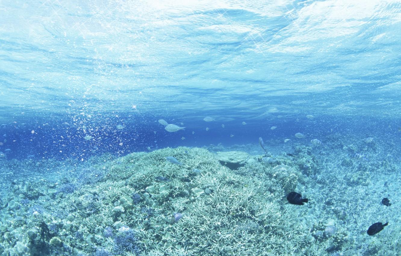 Photo wallpaper sea, wave, drops, fish, algae, glare, fish, art, waves, sea, art, drops, fish, water and …