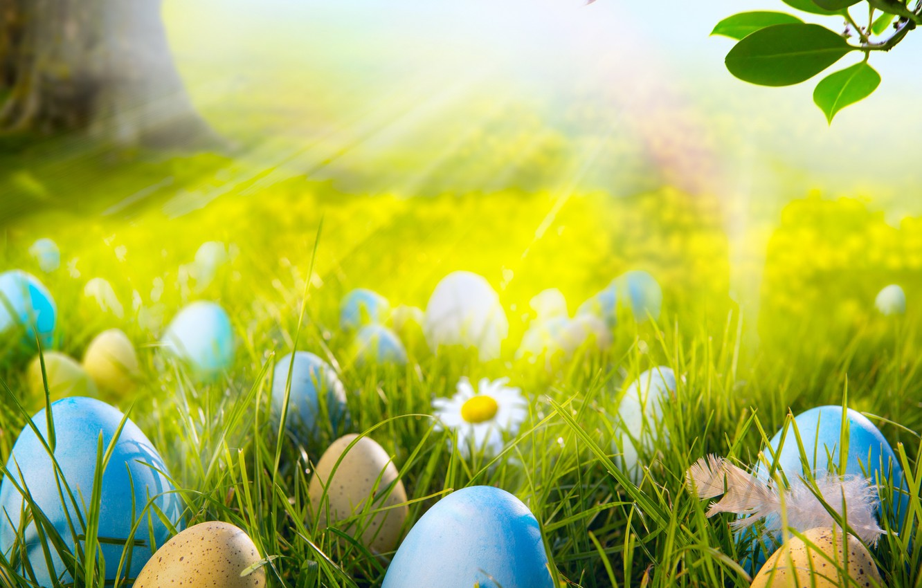 Photo wallpaper forest, grass, the sun, light, flowers, chamomile, eggs, spring, meadow, Easter, grass, sunshine, forest, flowers, …