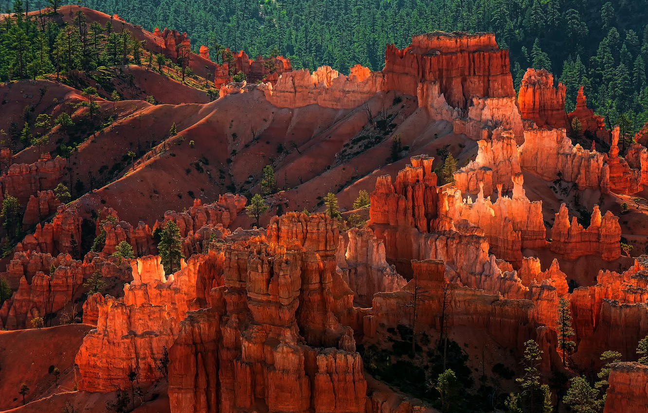 Photo wallpaper forest, rocks, the evening, USA, national Park Bryce Canyon, the geological structure of the Hoodoos, …