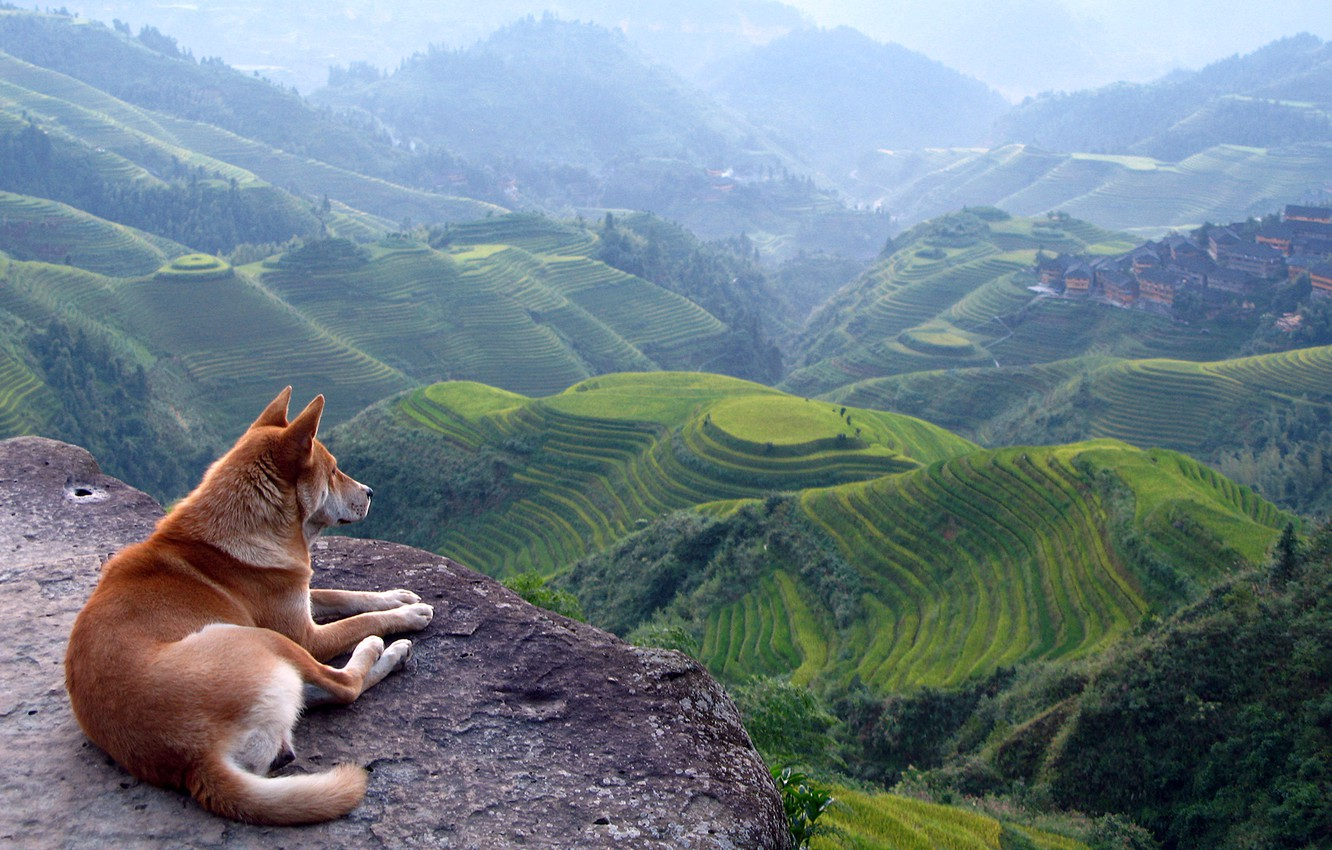 Photo wallpaper hills, Asia, Red dog, terrace