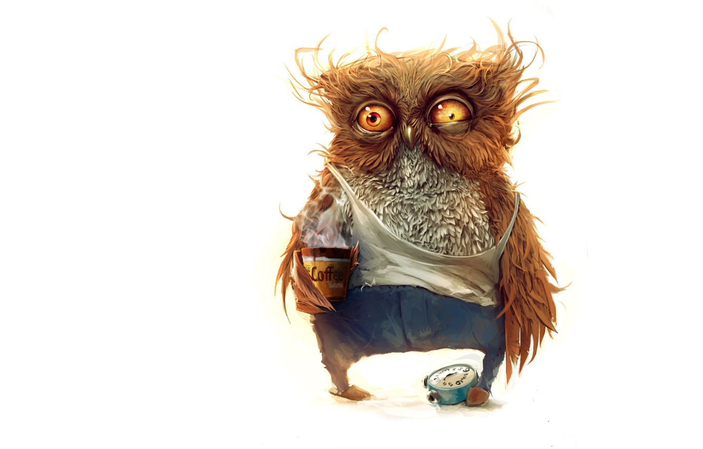 Photo wallpaper owl, - Hello good morning