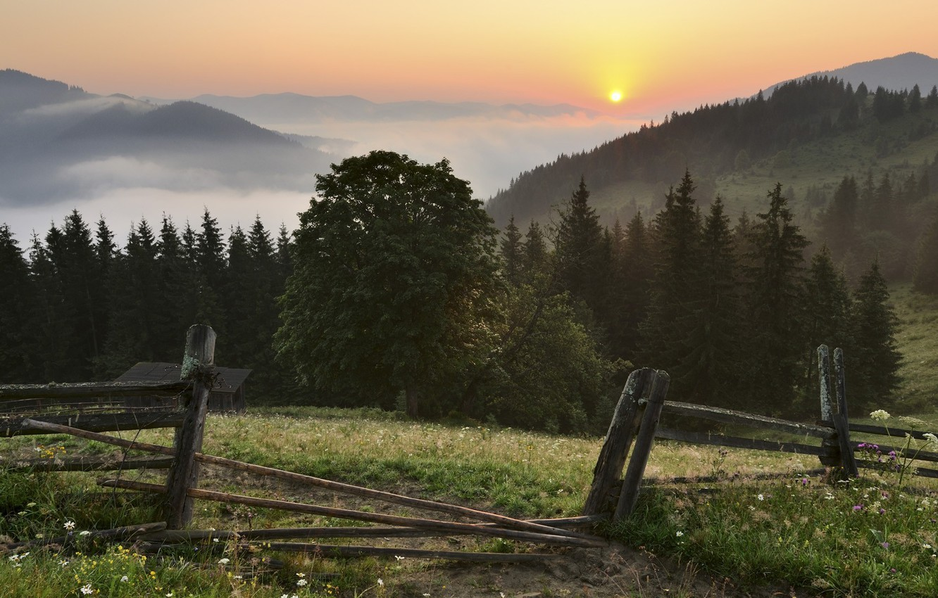 Photo wallpaper forest, the sky, grass, the sun, clouds, trees, landscape, sunset, flowers, mountains, nature, fog, the ...