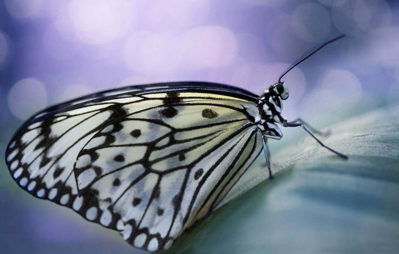 Photo wallpaper butterfly, wings, spot, antennae, bokeh