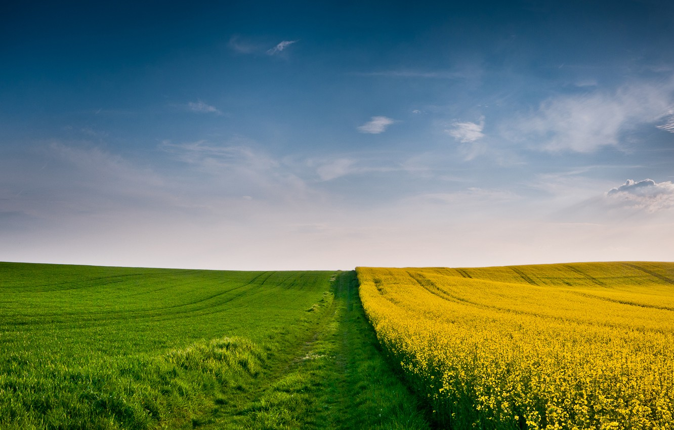 Photo wallpaper wheat, field, autumn, the sky, grass, clouds, yellow, green, the wind, field, yellow, cloud, spikelets, …
