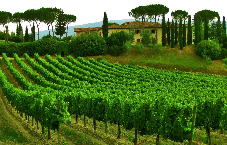 Photo wallpaper the sky, trees, house, Italy, vineyard, Tuscany